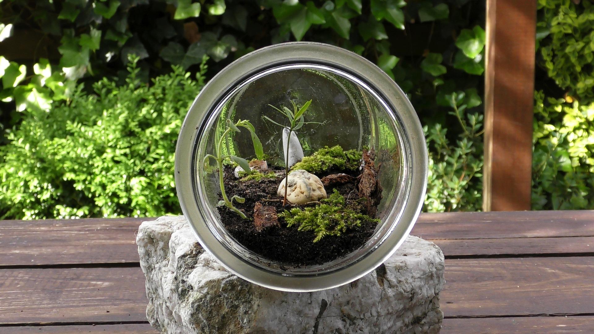 Comment Faire Un Terrarium Plante Grasse comment réaliser un terrarium chez soi ? | ligne jardin