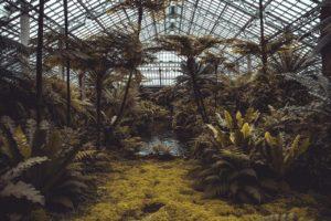 création d'un jardin botanique