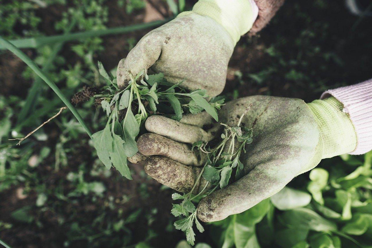 débroussaillage de votre jardin